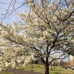 桜咲く素敵な春にステキな出会いを体験しませんか