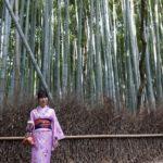 京都・大阪で日本の美しさを堪能しました
