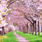 桜の開花とともにキッズボーカルの生徒さんが未来に向かって歌う「花」