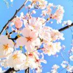 4月ご入会は入会金無料!春のご入会キャンペーン始まります!